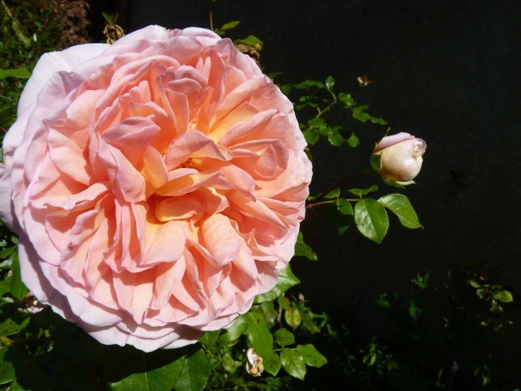 Gros plan sur les fleurs de notre jardin
