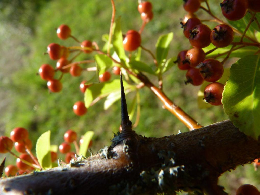 Quelques vues du jardin