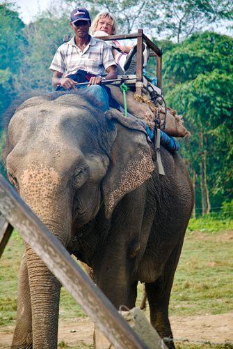 Ballade à dos d'éléphant à Chitwan (Népal)