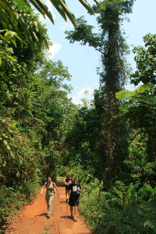 Album - 01. Trek dans la jungle