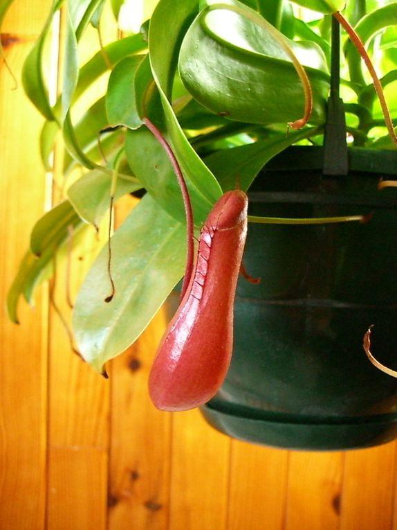 """Les plantes font partie de mes passions, je les aime originales et peu communes si possible.Je fais collection de cactus, de plantes """"sans terre"""", quelques orchidées.J'aime fleurir le jardin quand il me  reste un peu de temps."""
