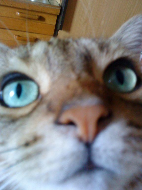 Choupette  vient de  la SPA.Elle a environ 3 ans, ne supporte pas les caresses, fait ce qu'elle veut quand elle veut.Elle aime jouer, manger, ne ronronne pas, mais elle me fait rire avec ces facéties.C'est un amour de chat!!!