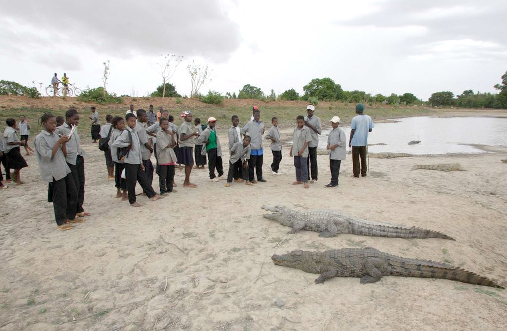 Visites de la mare aux crocodiles. Photos : Olivier BORN