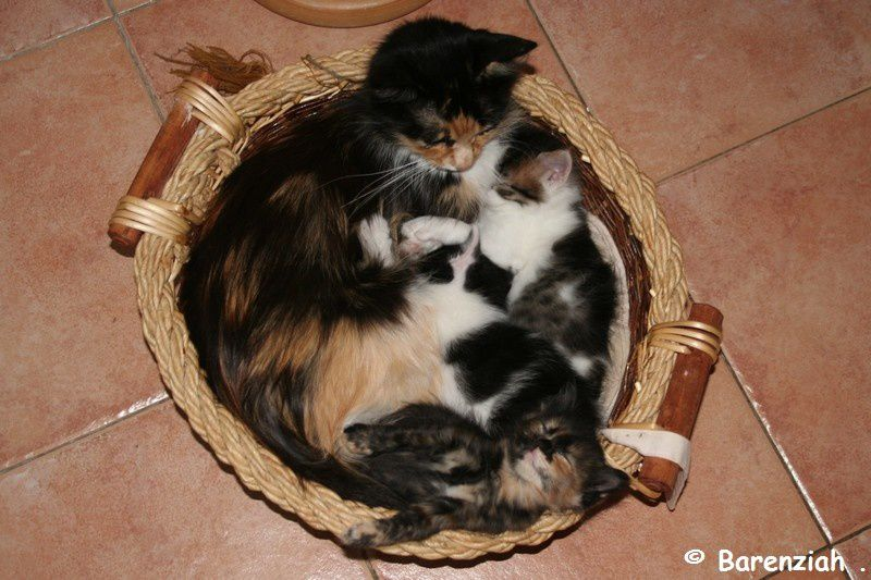 Album - Chantal-et-ses-chatons