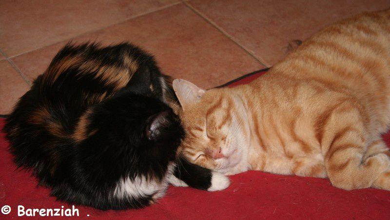 Album - Chien et chats de la maison