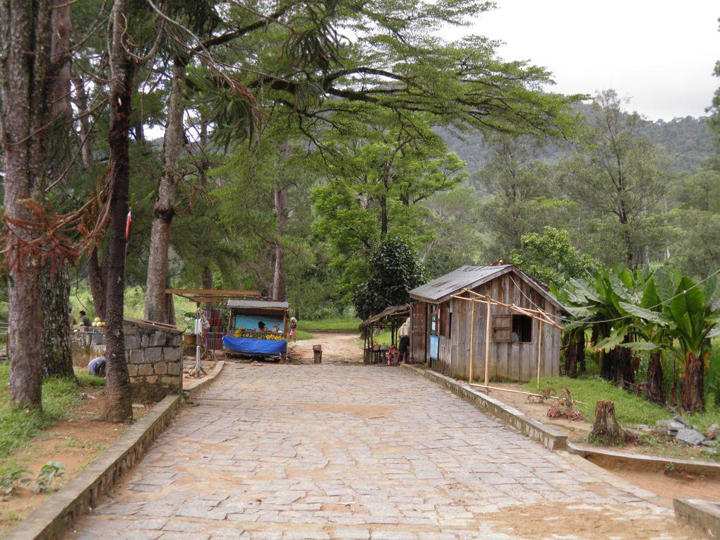 La parc de Ranomafana est un parc en foret humide.