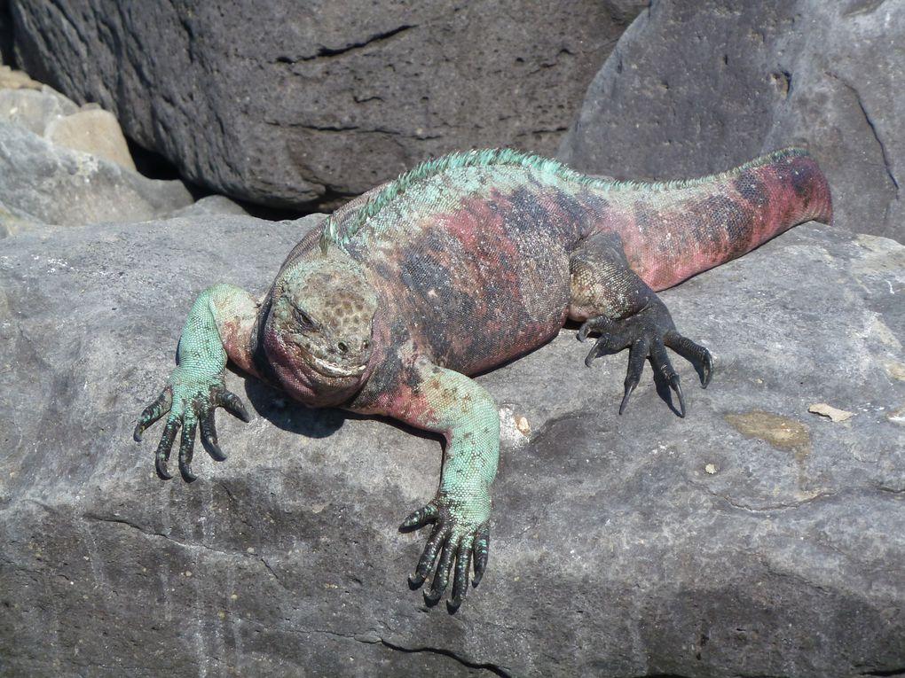 Album - Galapagos-2010