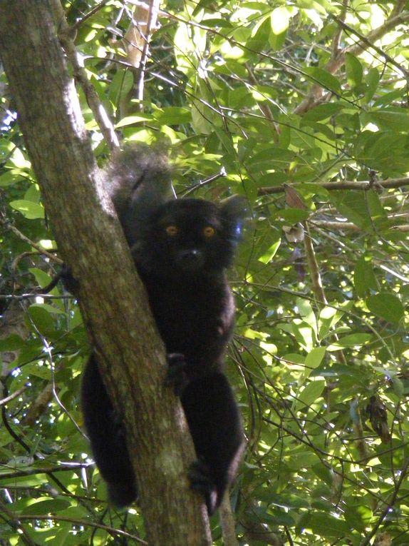 Album - Madagascar-2010