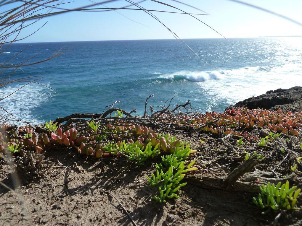 Album - Phillip-Island
