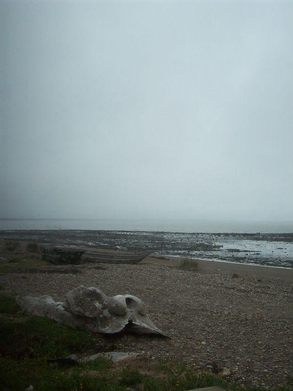 Album - v-De-Ushuaia-a-Punta-Arenas