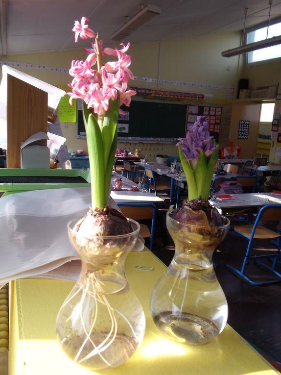 L'évolution de notre jardin et des essais de jardinage.......