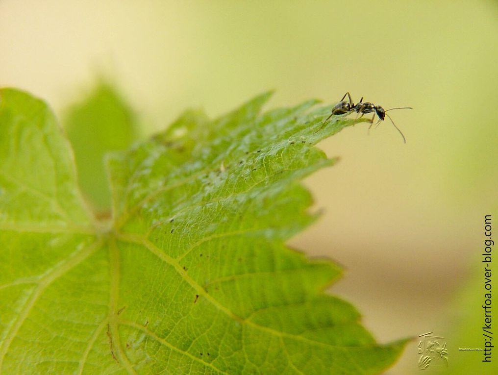 Album - fotos insectes2