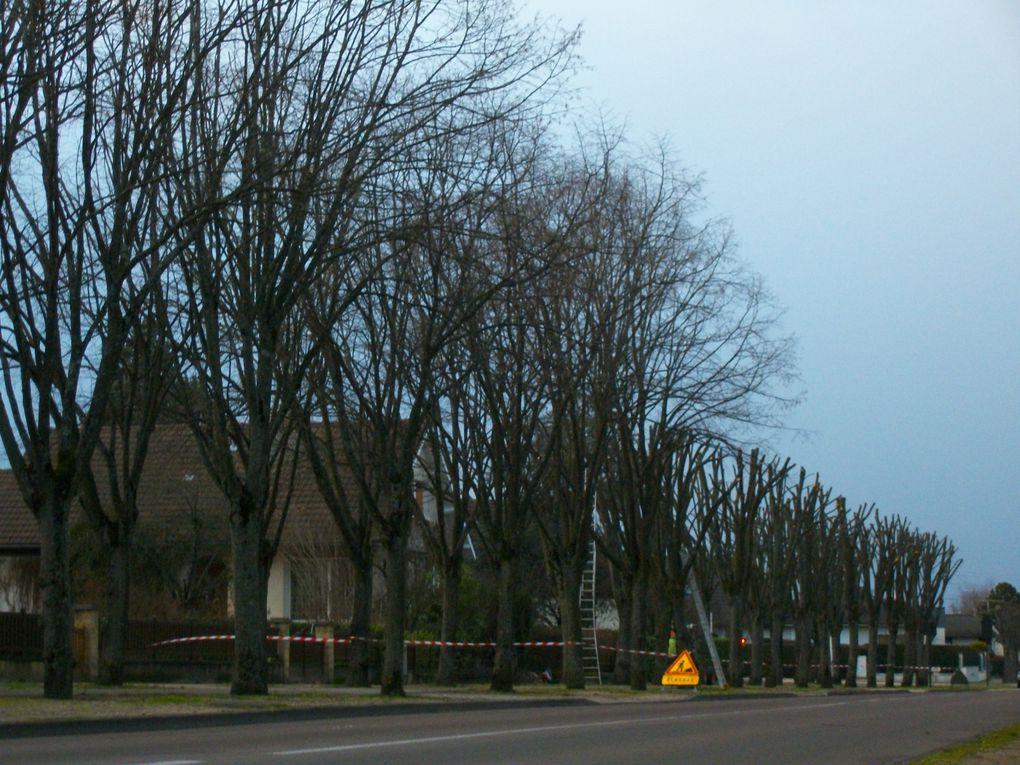 Dans le respect des arbres! Ne pas voir celà négativement, nous nous trouvons en milieu urbain. C'est une nécessité pour les préserver au mieux...
