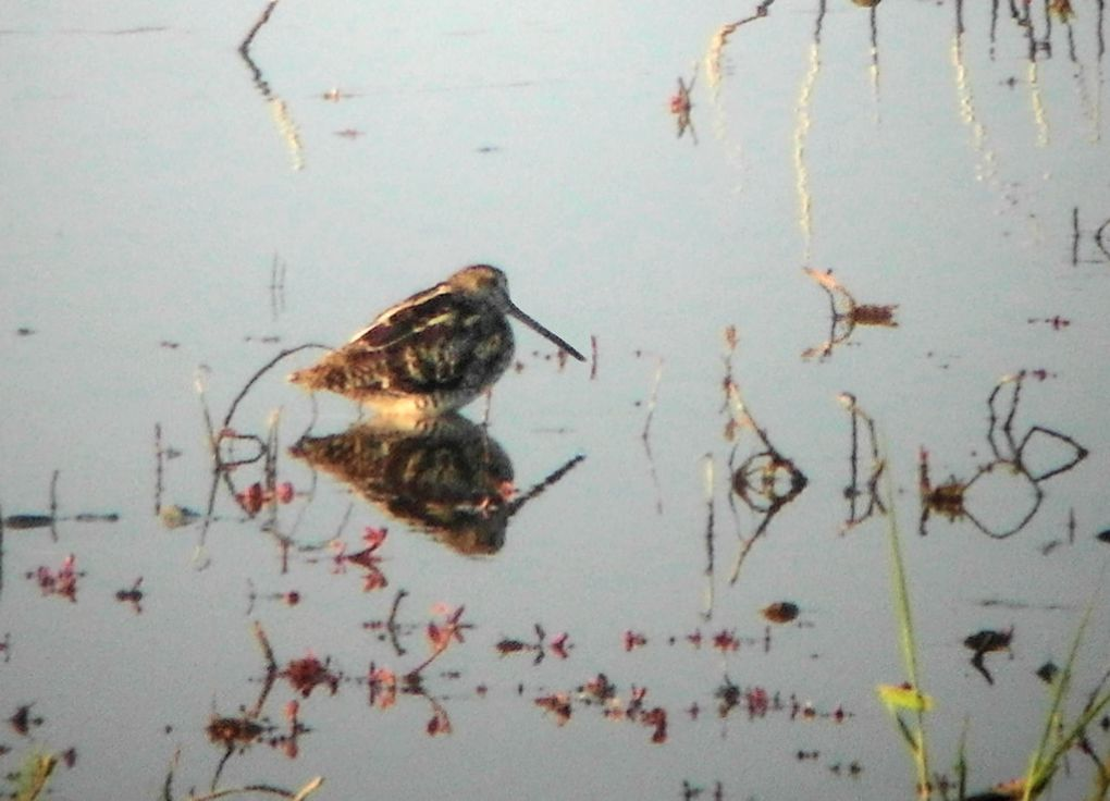 Album 1e - Nature et paysages 2012