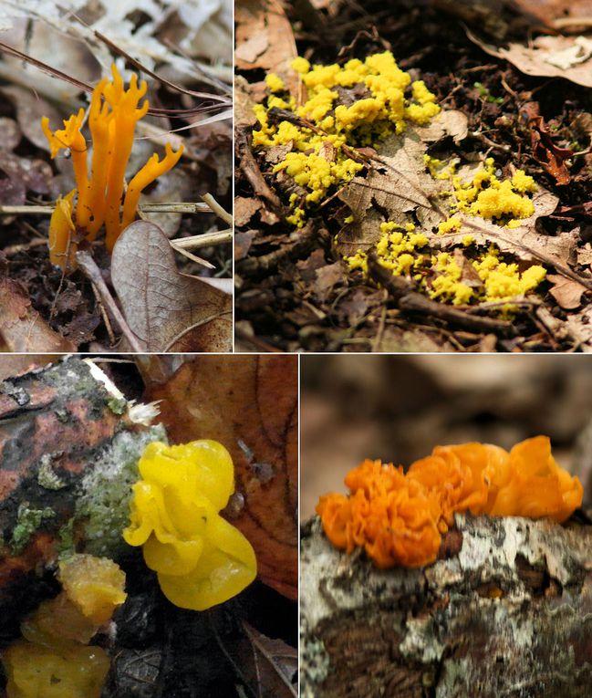 En vrac, notre panier de champignons... à identifier !