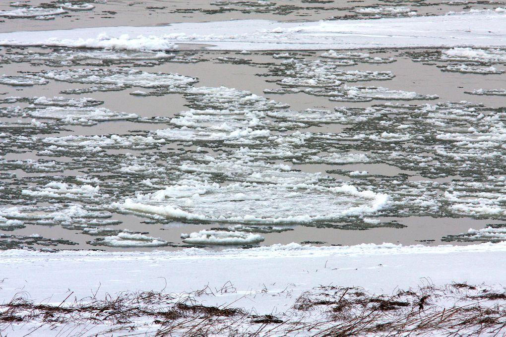 Février 2012, épisode neigeux suivi de froids descendant à Mardié à-12°C, au total quinze jours d'un hiver sévère, éprouvant pour la faune du territoire.