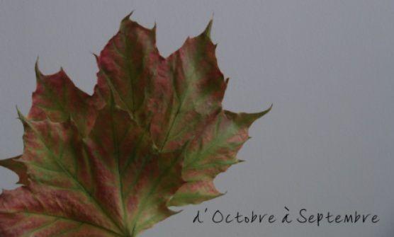 Album - octobre 2012