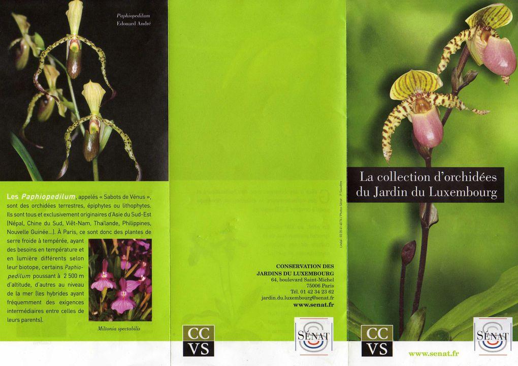Album - Orchidees-du-jardin-du-Luxembourg