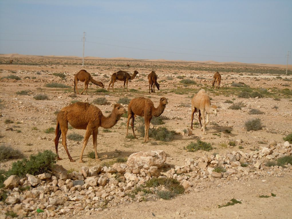 Album - 8. Agadir-Dakhla-Nouadhibou