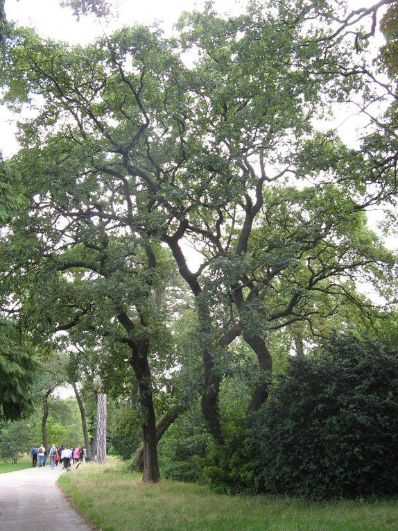 Dernière marche au jardin de Bagatelle.16 marcheurs 18°C
