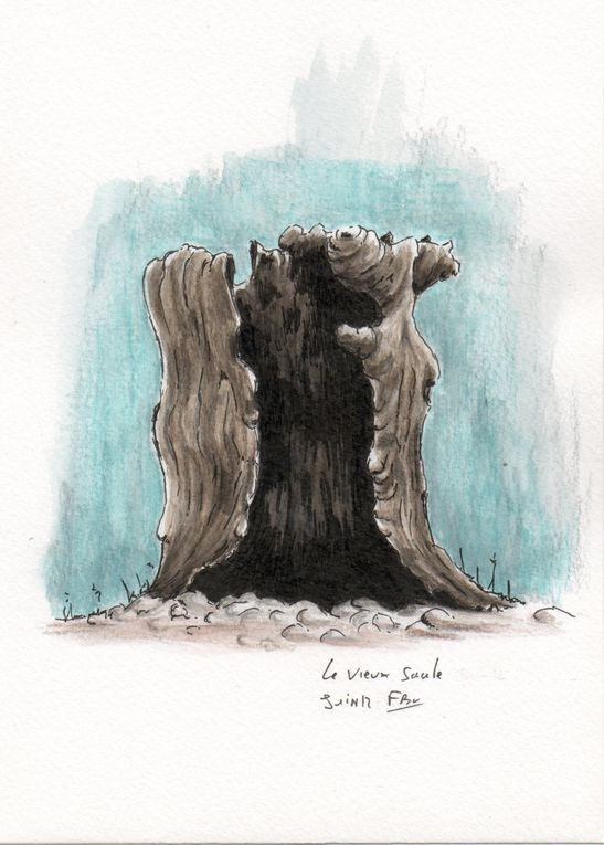Album - Paysages--vegetaux-