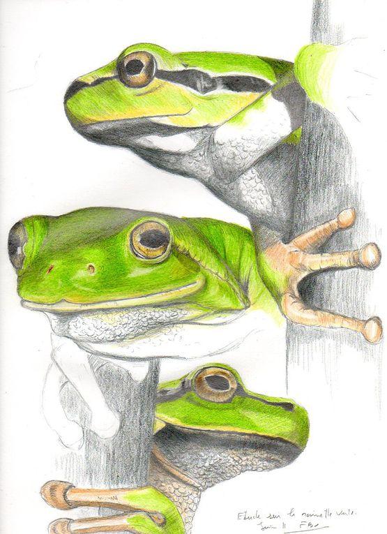 Album - Reptiles-Amphibiens