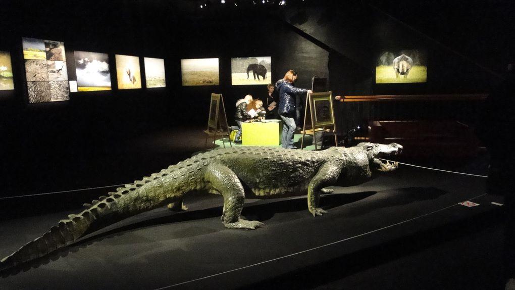visite du muséum d'histoire naturelle du havre