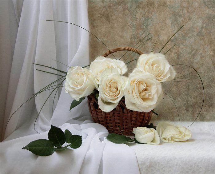 Album - belles-images