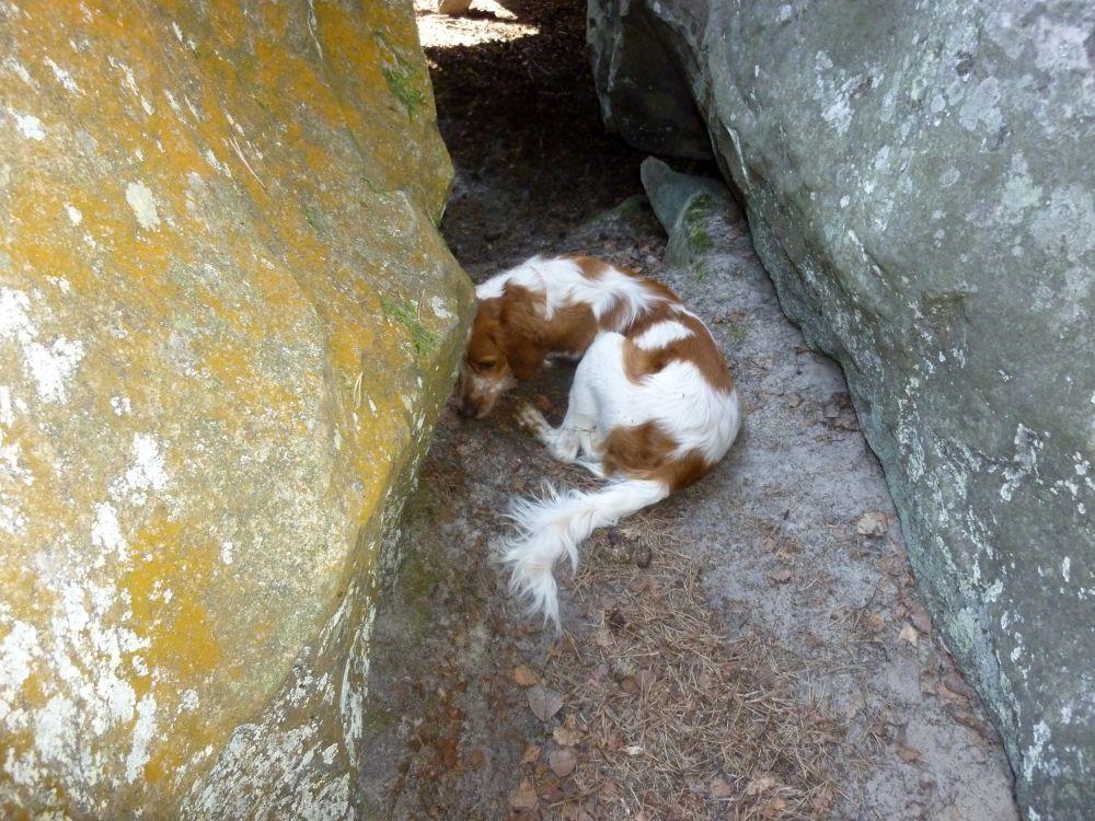 Sur la route des gorges de Franchart, une multitude de grottes... un rêve pour les caches, un délice pour les enfants !