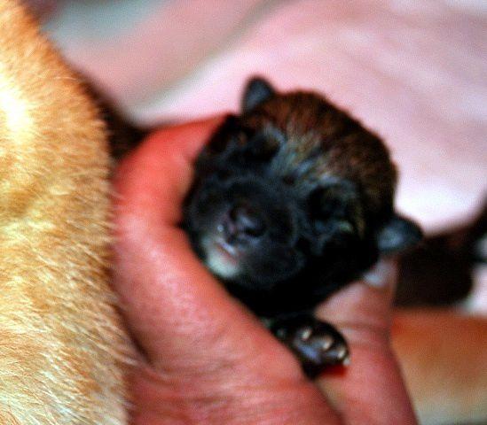 Photo de Fendi de la naissance à ses 3 mois.
