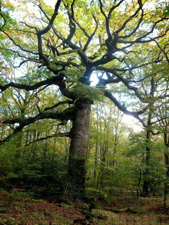 Album - Arbres de nos forêts
