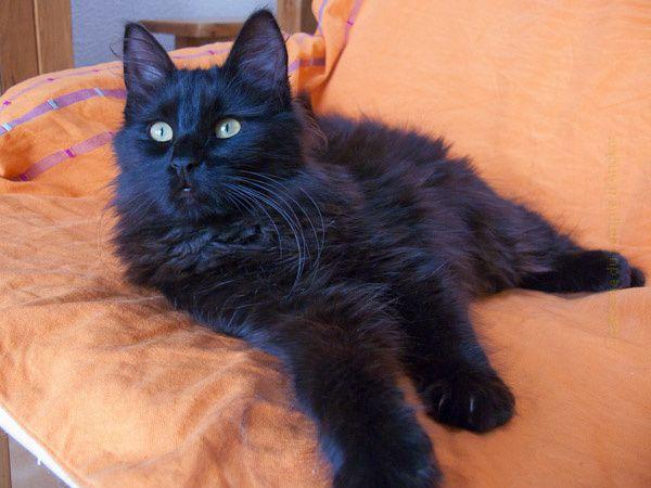 Quelques photos de ce blog chats... Félinement.