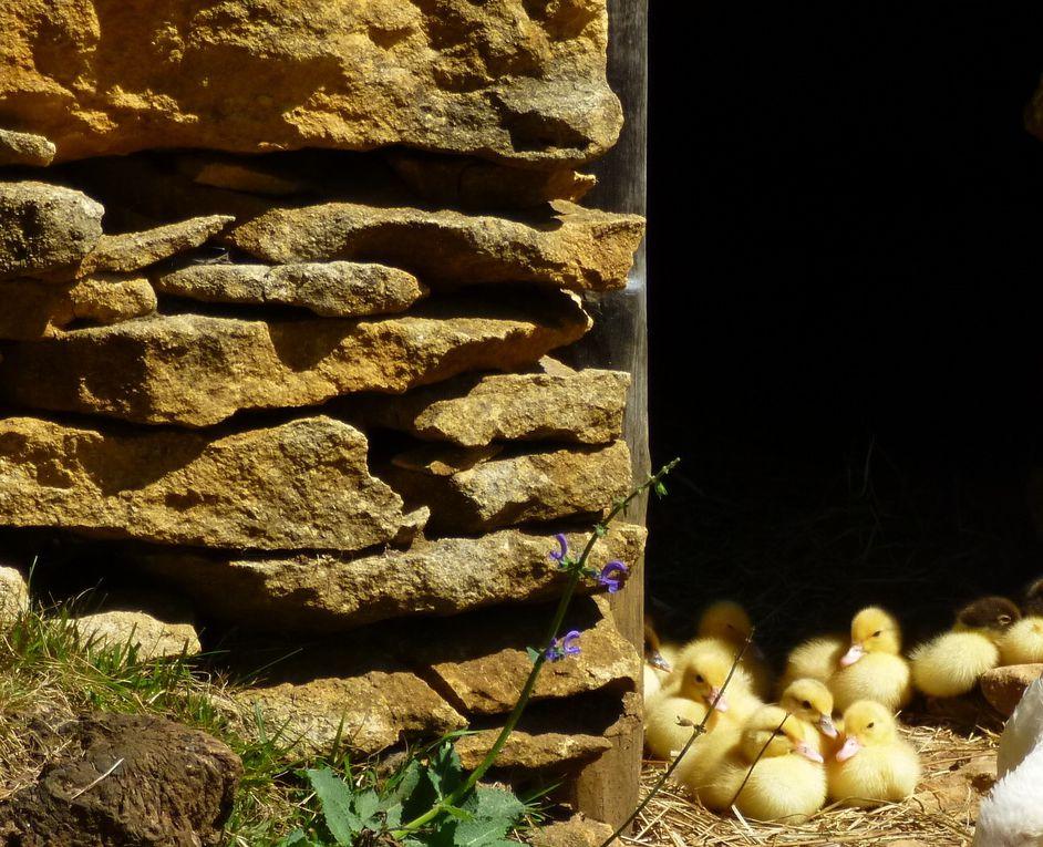 Album - Dordogne