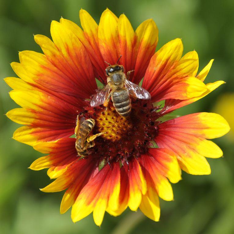 Mélange de fleurs et d'insectes colorés