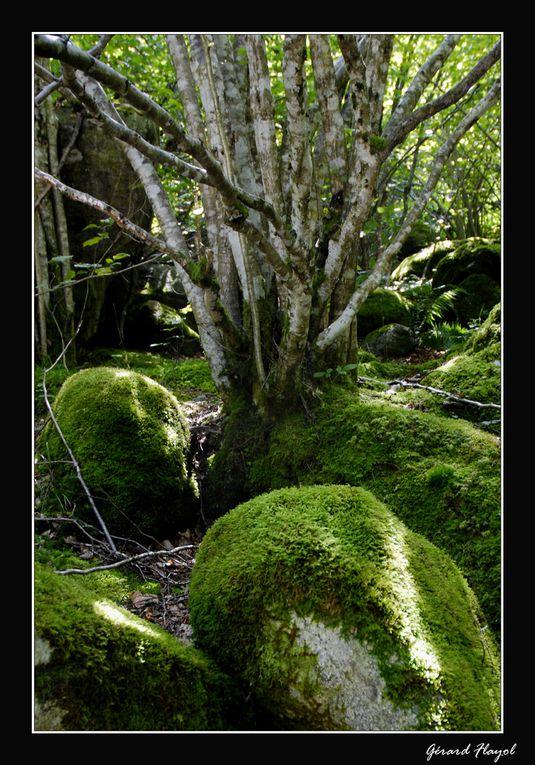 Album - Arbres et forêts
