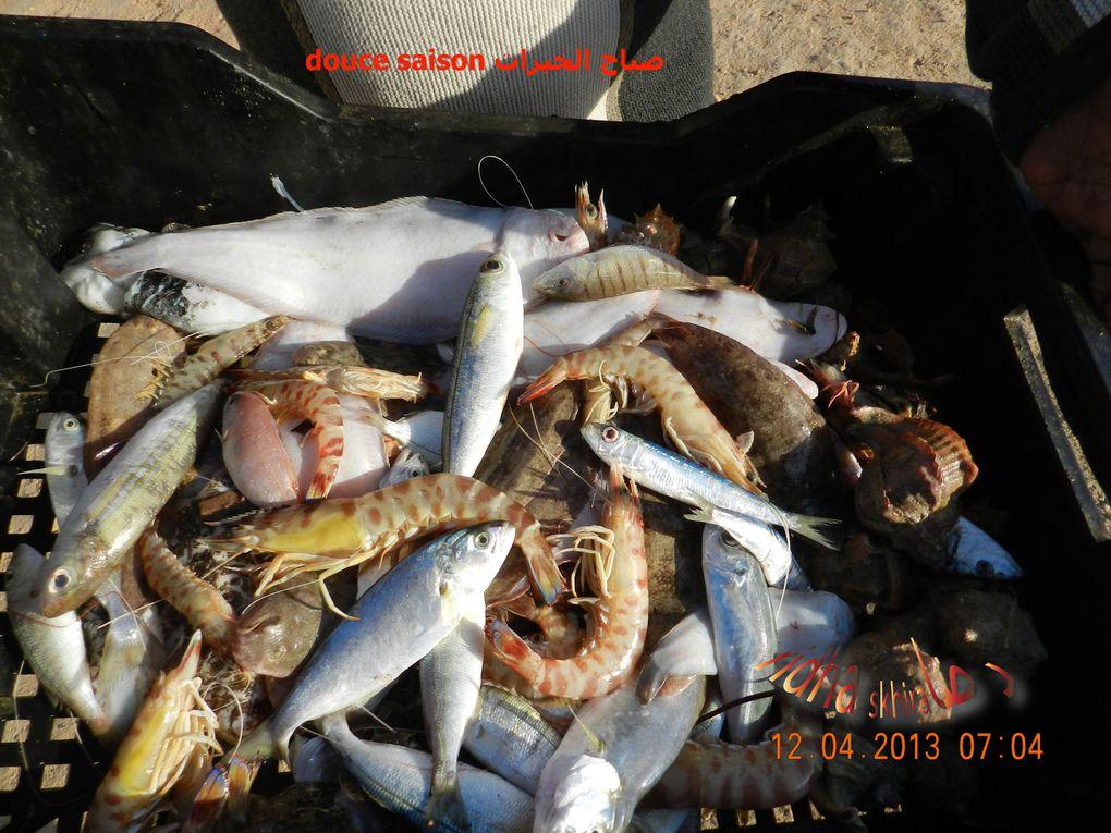 la pêche au thon موسم التن2013 la sasion de la pêche au thon commence&#x3B; se3noun et son équipe au rdvبداية موسم صيد التن بداتالزعنون و بحارته في الموعد photos/vidéos : ridha skhira 2013www.skh
