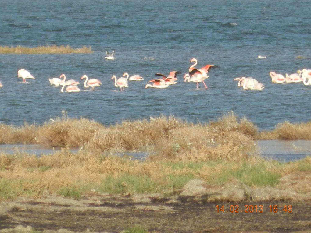 Ces îles se situent à 65 km au Nord de Gabès. Elles sont distantes de 65 Km de la ville de Sfax et d'une vingtaine de Km du port de Skhira.http://www.flickr.com/photos/laskhira/sets