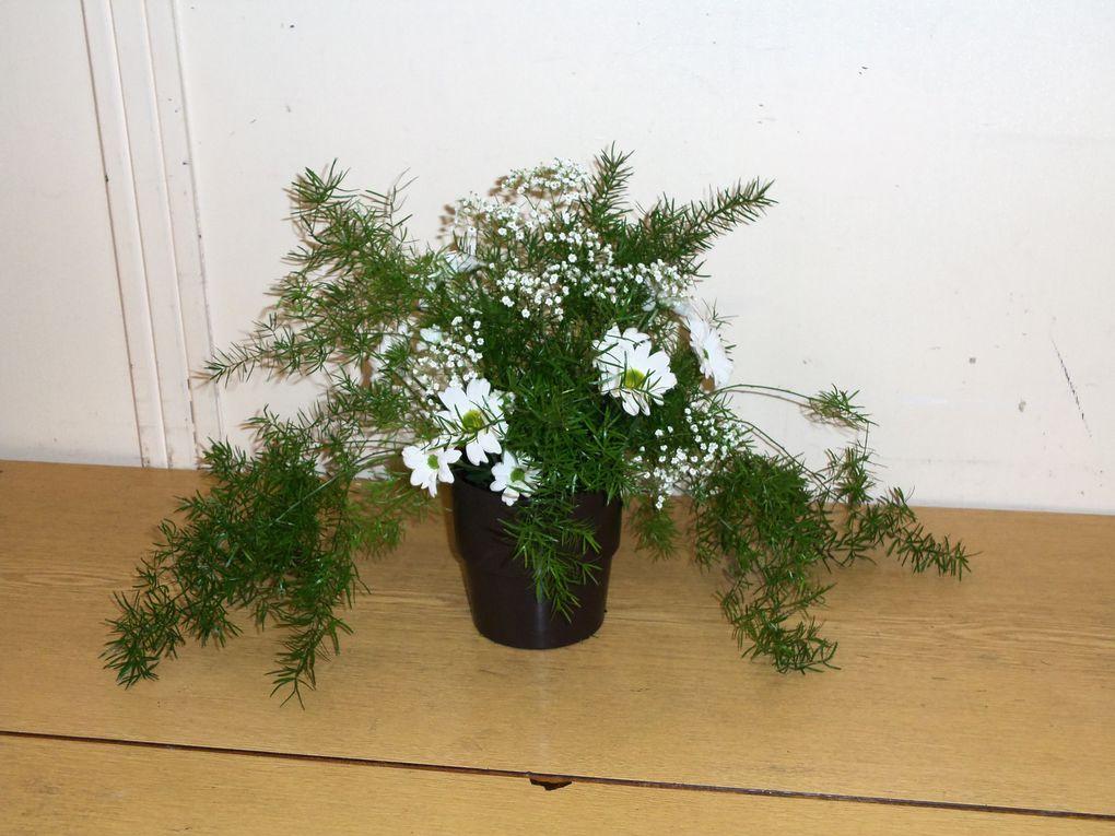 Habillage d'une plante verte