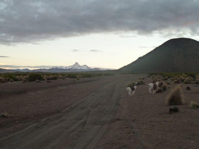 Album - 2011-Sajama-Bolivie