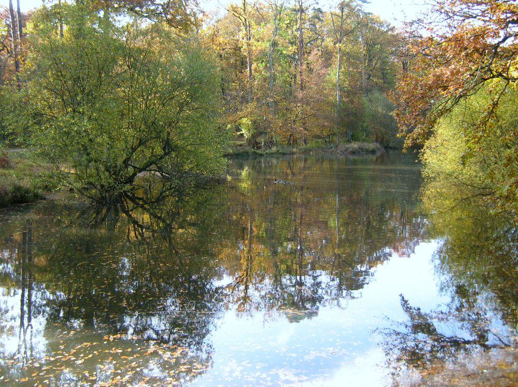coucher du soleil sur l'étang du Perray en Yvelines