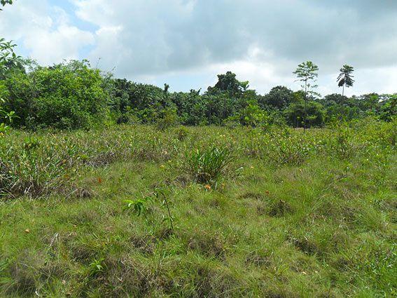 Encore un album à consulter régulièrement ! Il rassemble des paysages typiques de la Guyane. Une vue d'ensemble en quelques clics, un avant-goût de ce qui vous attend ici... Photos (c) Brittia Guiriec