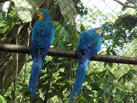 Situé à Macouria, le parc zoologique et botanique rassemble les principales espèces de la faune (vertébrés) et de la flore de Guyane. Photos (c) Brittia Guiriec