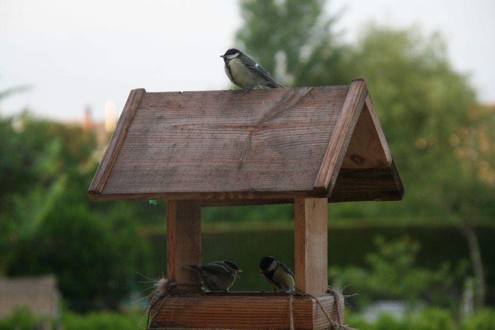 des photos d'oiseaux