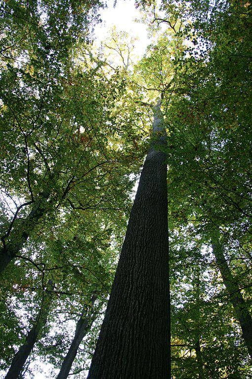 des images de la forêt de bercé , en sarthe ...