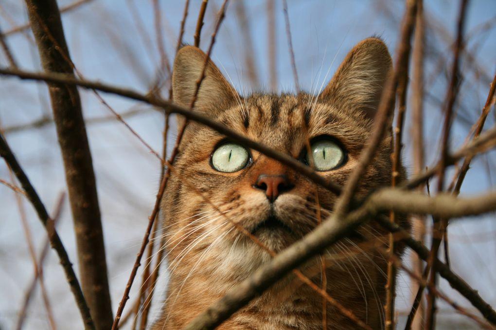 des photos de mon chat calin faites exclusivement avec mon reflex.