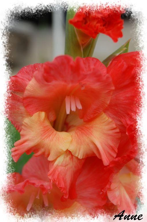 2ème dossier sur les fleurs. Le premier étant plein