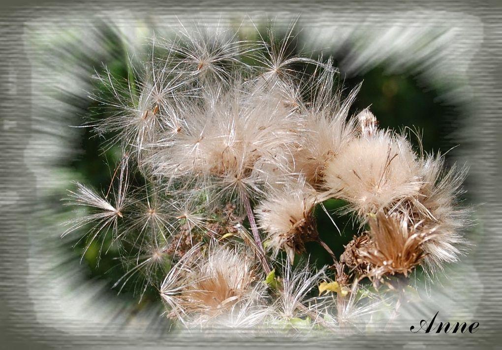 Vous y trouverez toutes mes photos ayant rapport avec les fleurs