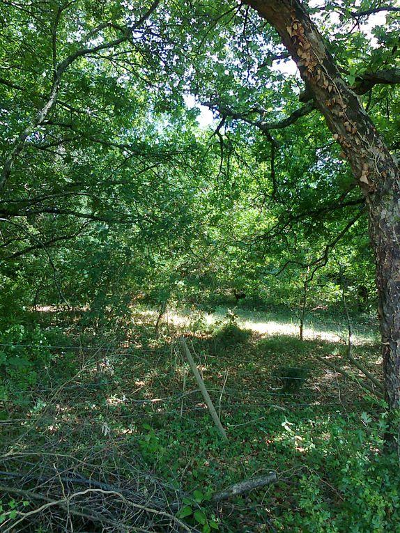 Album - St-medard en Jalles et la biodiversité