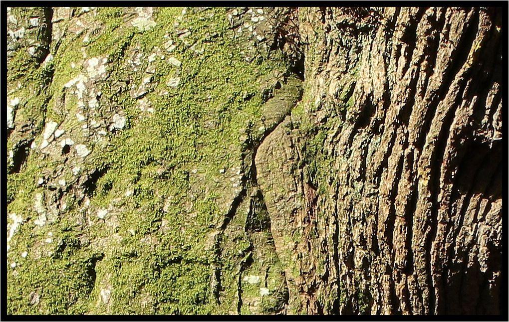 &quot&#x3B;Z'Album&quot&#x3B; : arbres-2