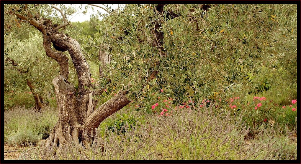 &quot&#x3B;Z'Album&quot&#x3B; : arbres